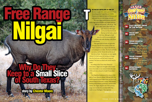 Nilgai story from April, 2018 issue of Texas Fish & Game