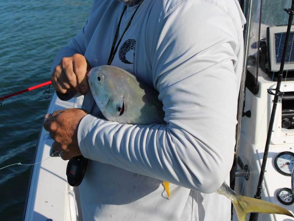 jack crevalle fishing