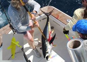 spreader bar for tuna fishing