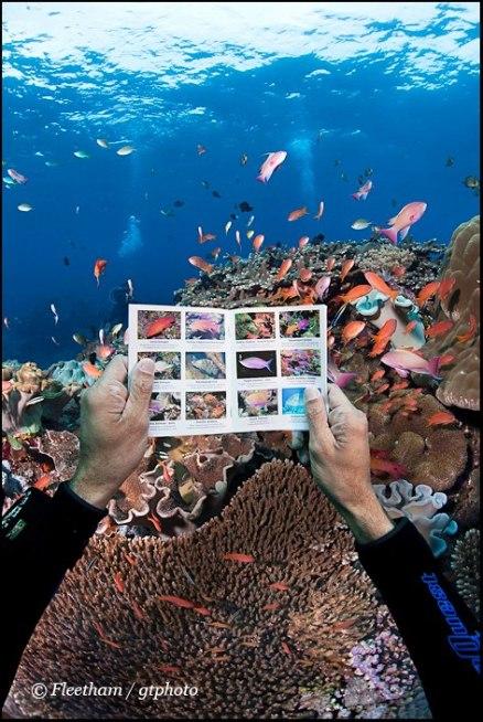 Fish In a Pocket Underwater