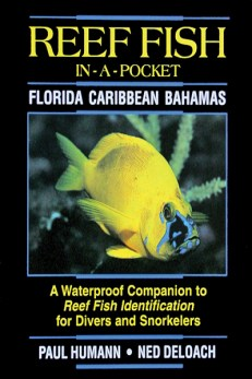 Fish In A Pocket Florida Caribbean Bahamas