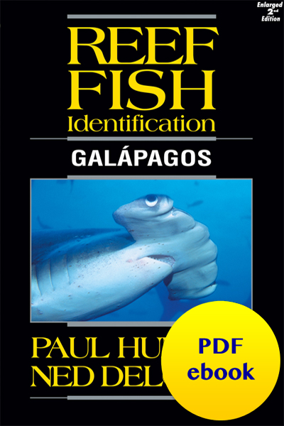 Reef Fish Identification Galapagos
