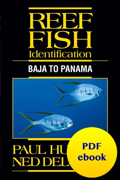 Reef Fish Identification Baja to Panama pdf ebook
