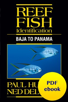 Reef Fish Identification Baja to Panama pdf ebook