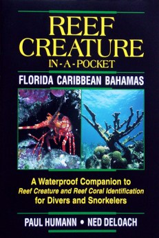 Reef Creature In a Pocket Florida Caribbean Bahamas