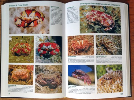 Page Spread Reef Creature ID