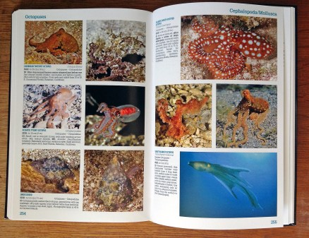 Page Spread 02 Reef Creature ID