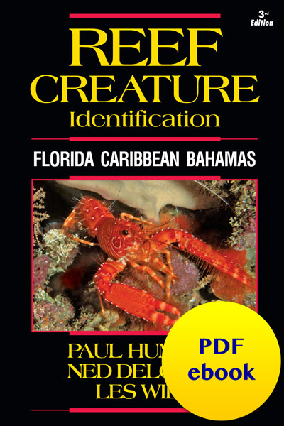 Reef Creature ID Caribbean PDF ebook