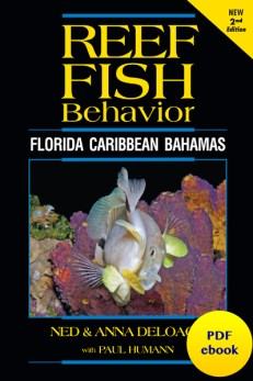 Reef Fish Behavior ebook