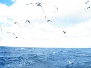 第7回アングルマス釣り大会 樽前沖
