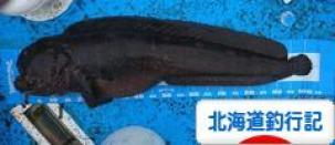 にほんブログ村 釣りブログ 北海道釣行記へ