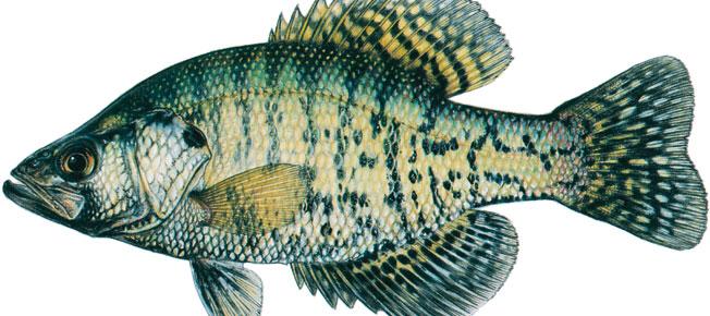 fishquiz-652×290