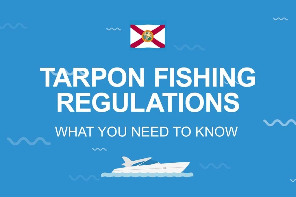 """A blue infographic with words """"Tarpon fishing regulations"""" on it and a Florida flag"""