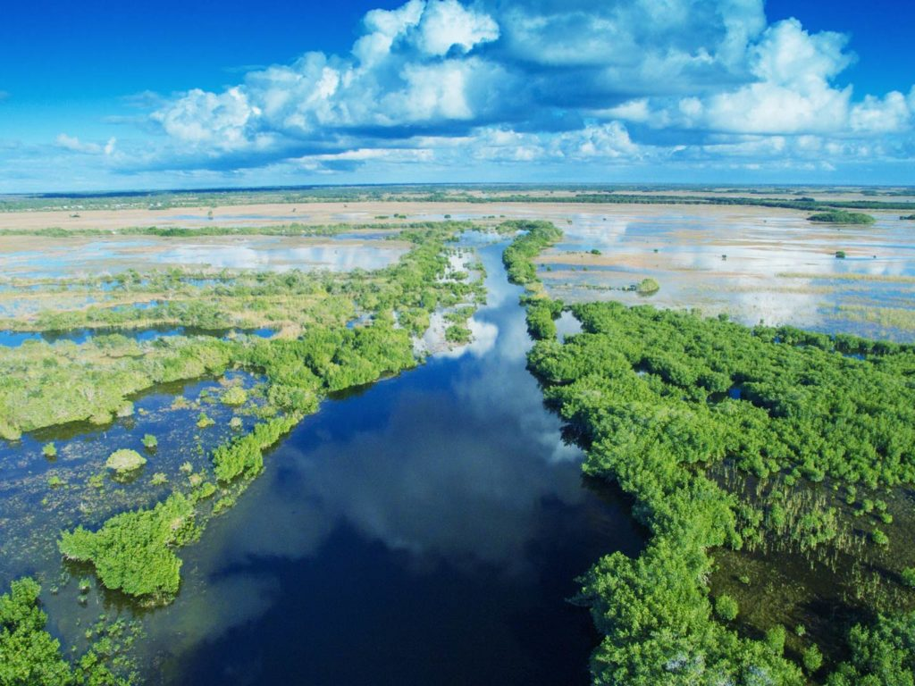 An aerial view of the Everglades swamps