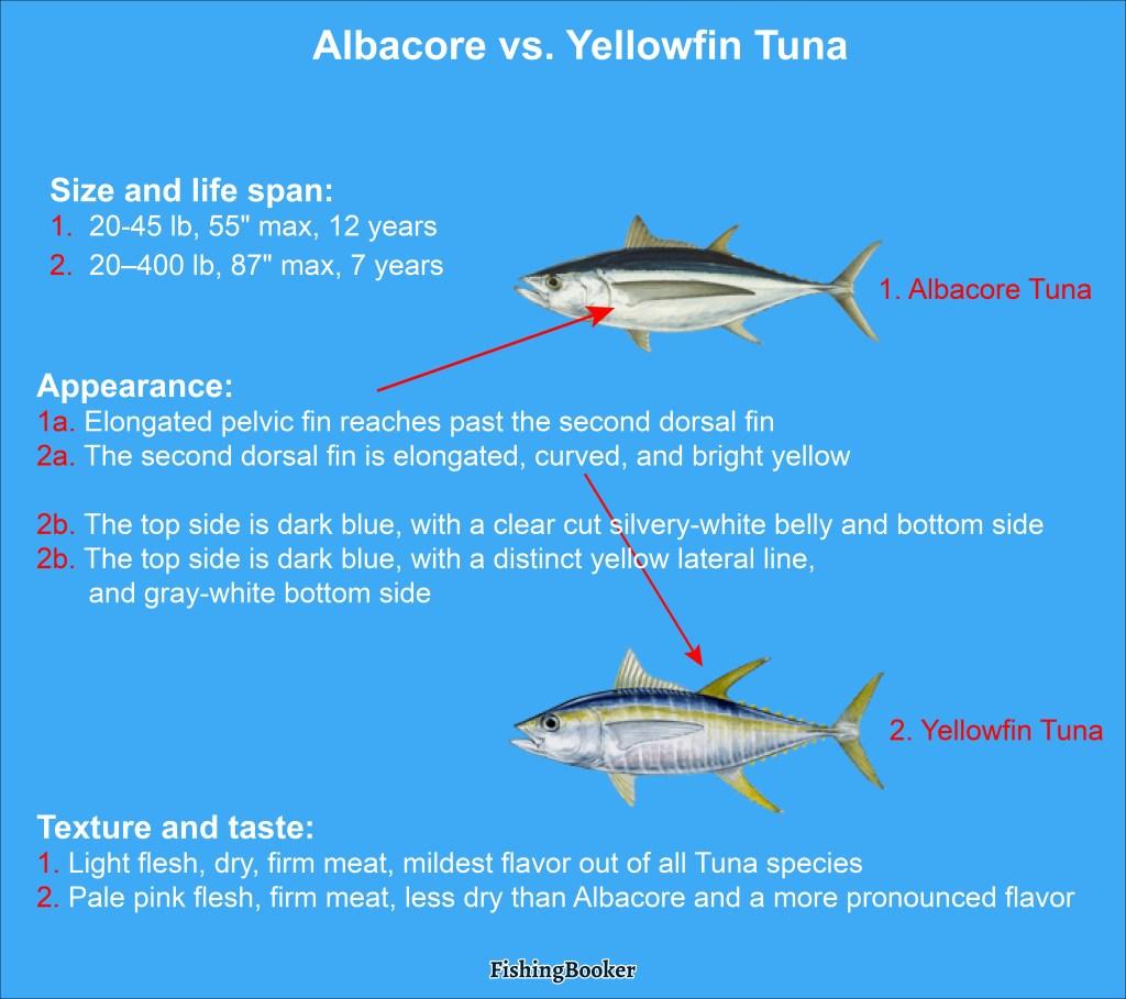 Albacore vs. Yellowfin Tuna: a comparison of size, appearance, and taste