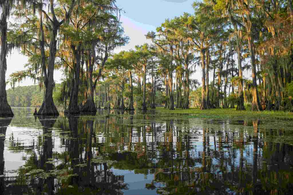 Caddo Lake's bayou, with trees and murky shallow waters