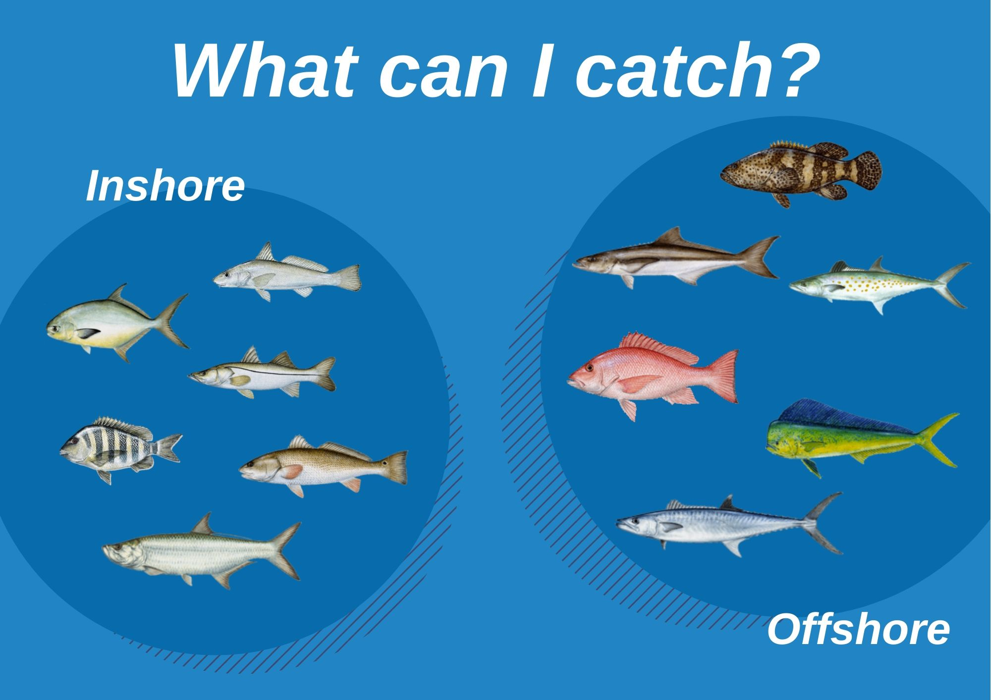 An infographic showing the top fish species to target in Boca Grande, Florida in offshore and inshore waters