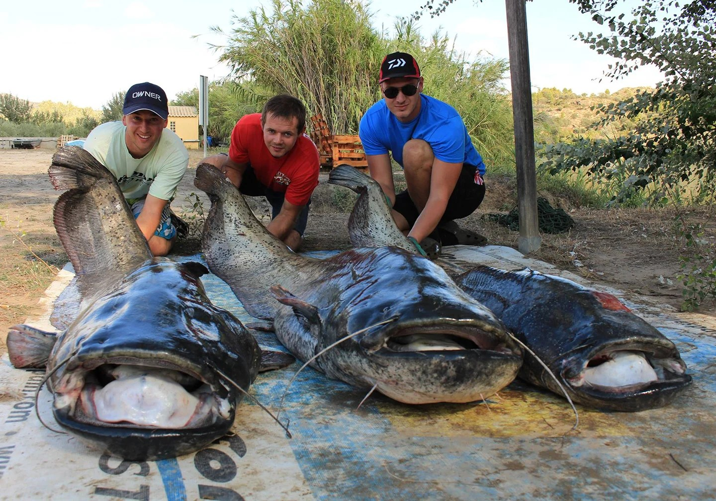 Three anglers posing with giant Wels Catfish, a frequent target on bucket list fishing trips