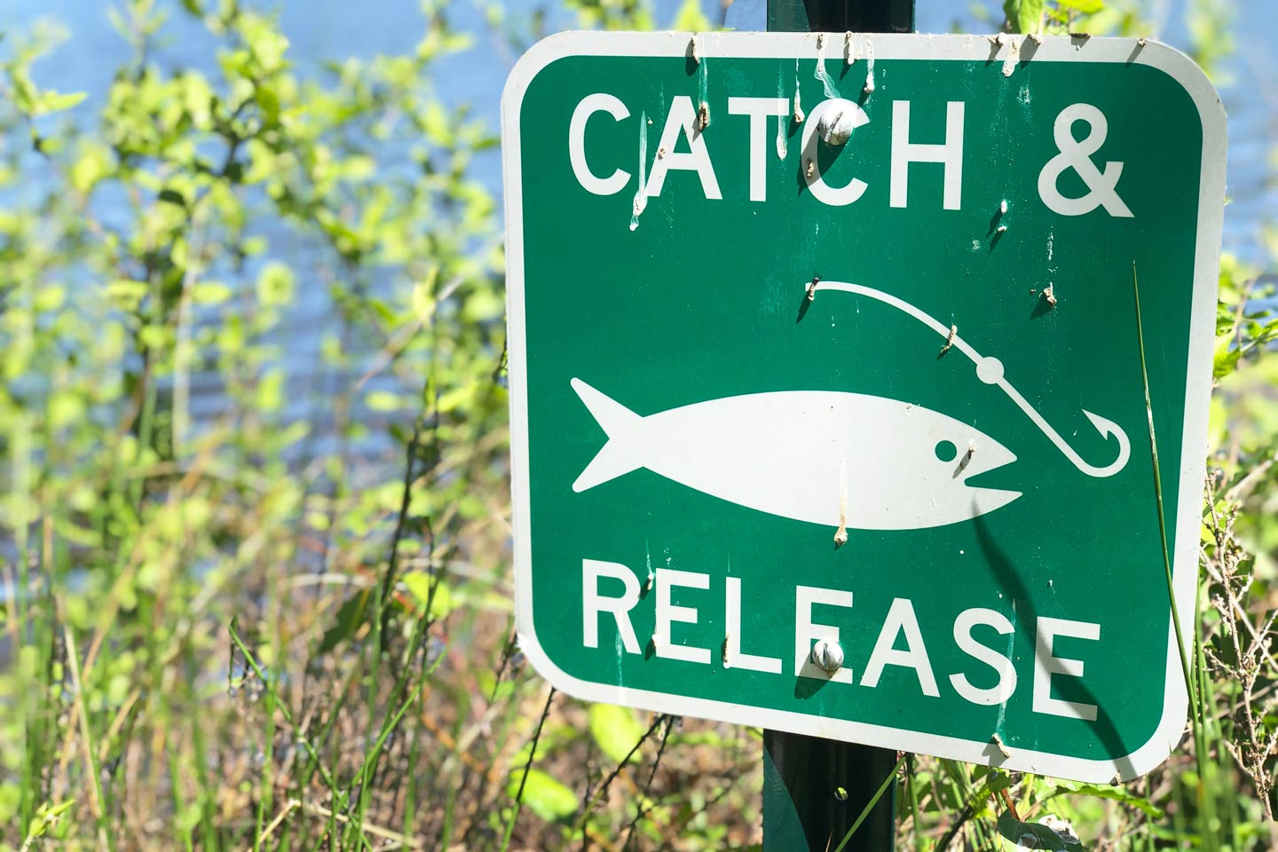 Catch and release fishing signage in New Smyrna Beach