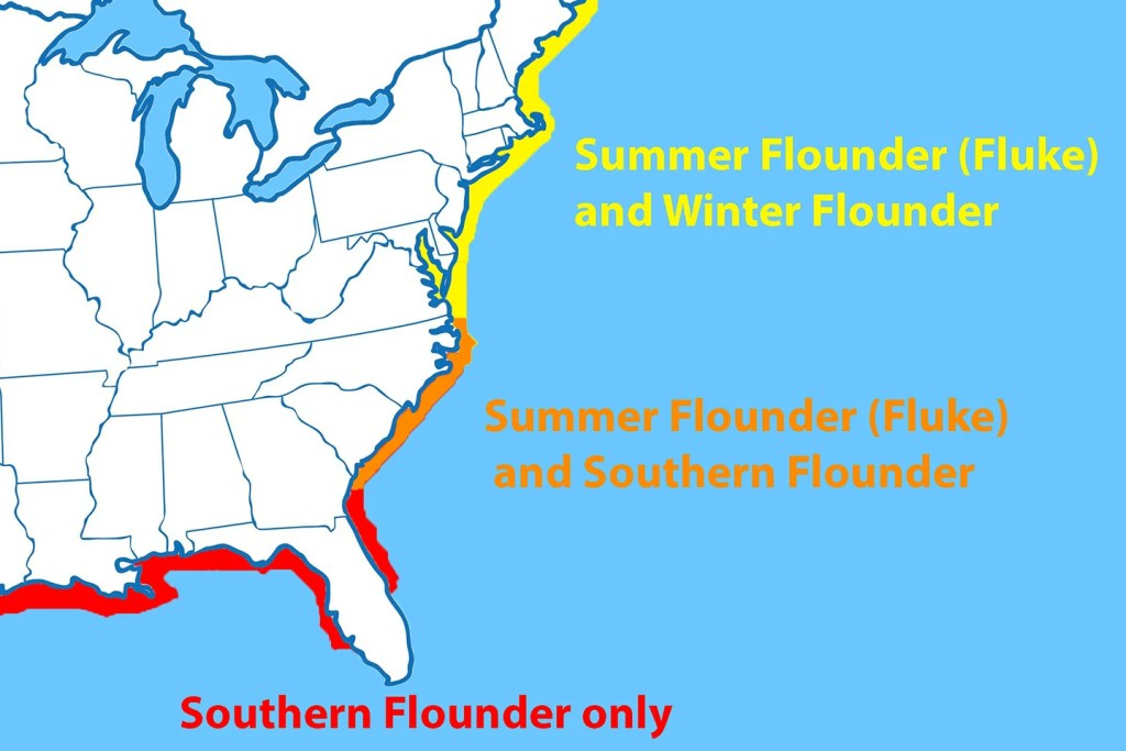 A map showing the distribution of Southern Flounder, Fluke, and Winter Flounder on the US East Coast. Southern Flounder is marked in red, the overlap of Southern Flounder and Fluke is marked in orange, and the overlap of Fluke and Winter Flounder is marked in yellow.