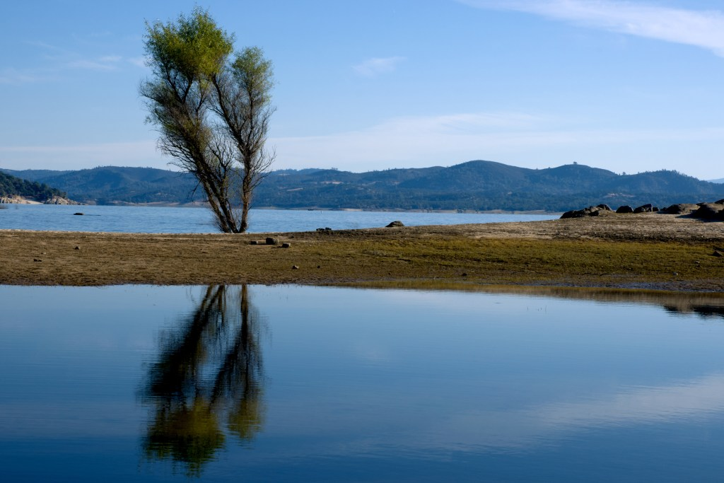 a tree in the middle of folsom lake