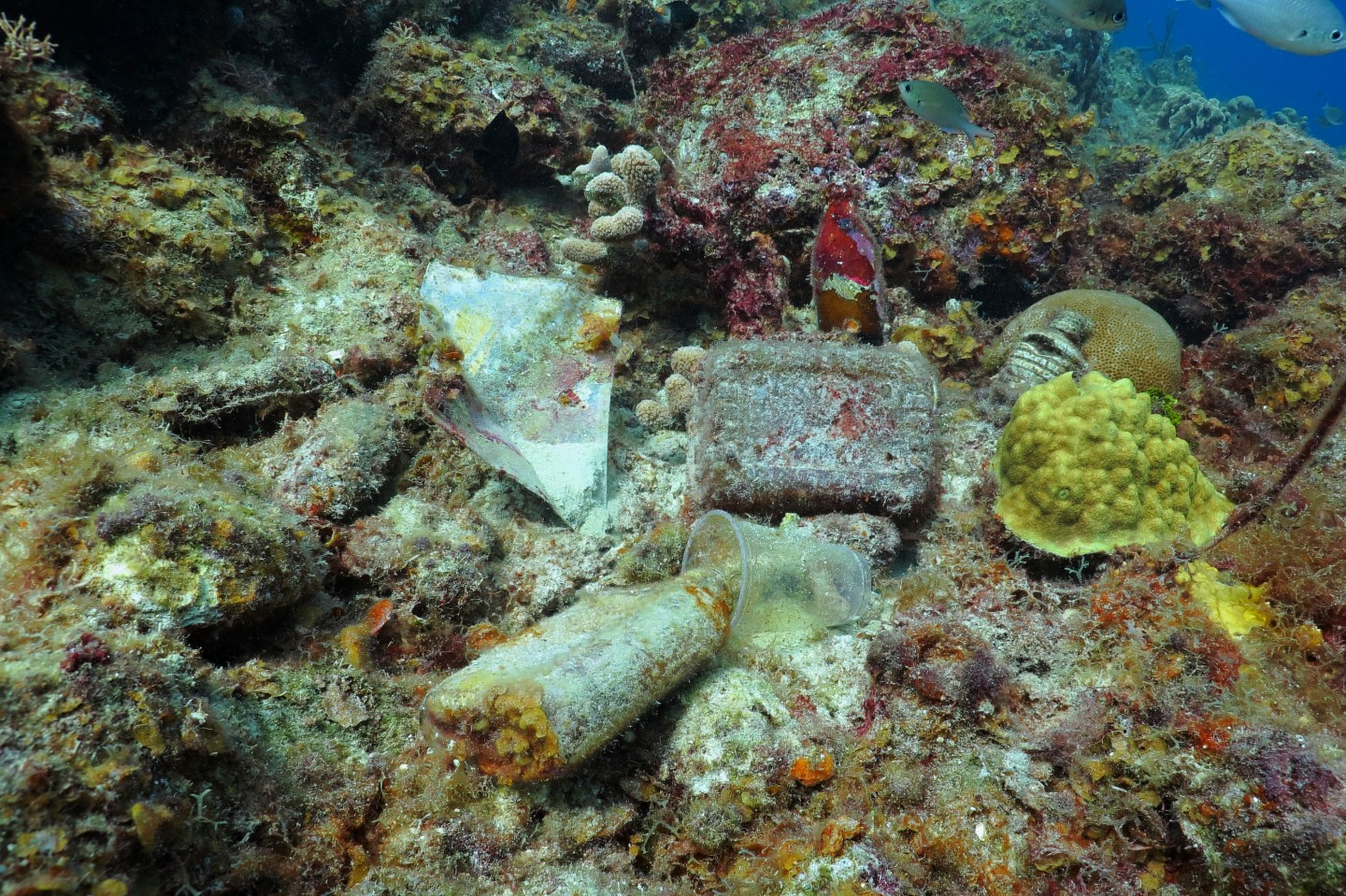 Coral reef conservation: Garbage and plastic bottles on a coral reef