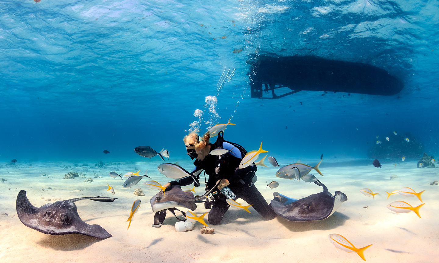 A scuba diver underwater stroking a stingray with yellowtail snapper fish swimming around him and the shadow of a boat above.