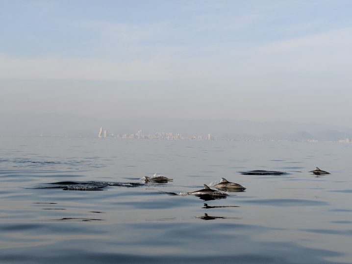 A pod of dolphins coming out of the water with Fujairah in the distance