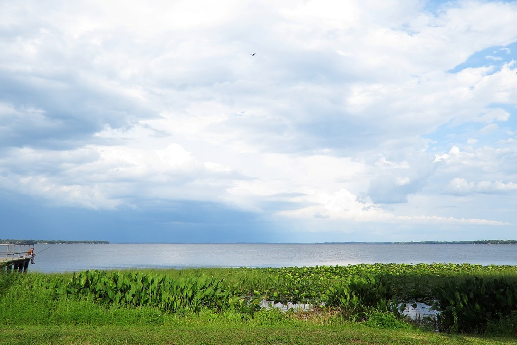 A view from the shore of Lake Harris, Florida with green weeds, blue-grey water, and cloudy sky. An angler is fishing from a small jetty on the left and a bird is flying in the sky in the center.