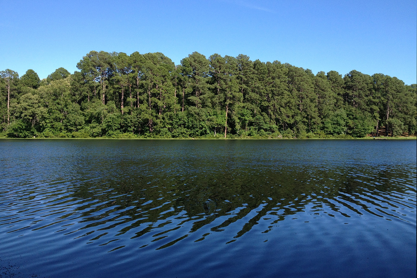 A view of Lake Palestine, with green trees in the distance