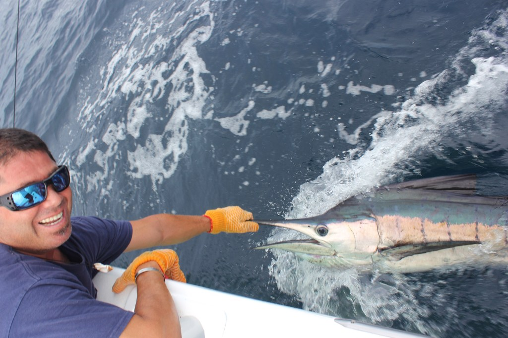 An angler wearing sunglasses and gloves holding a Marlin alongside a boat before it is released