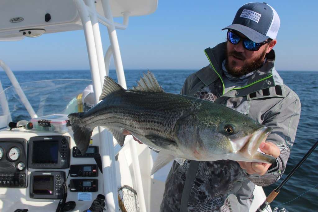 An angler holding a Striped Bass on a charter boat