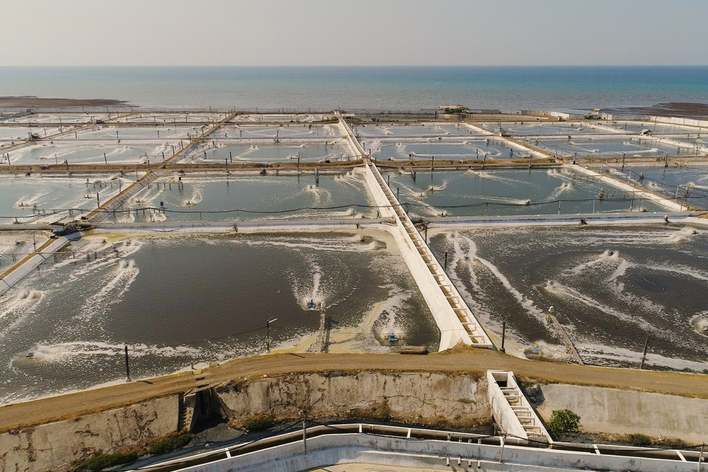 a large fish farm made up of open ponds next to the sea.