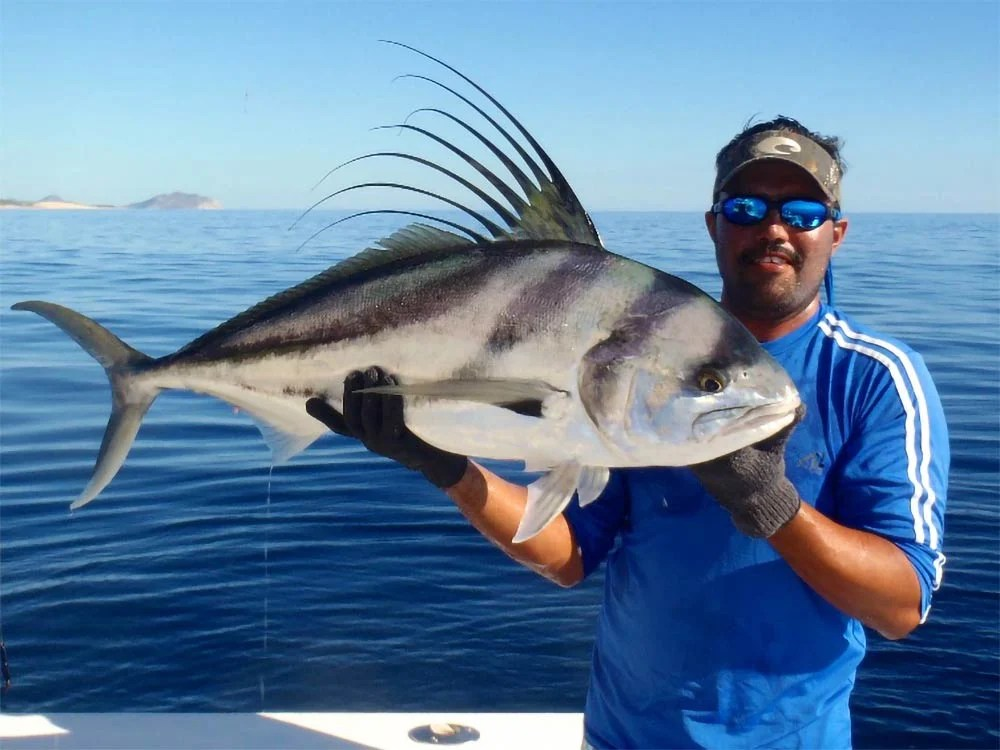 An angler holds a large Roosterfish caught fishing in La Paz