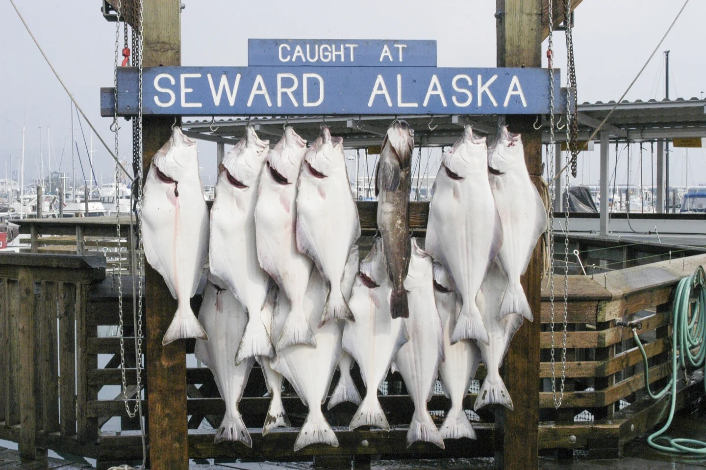 Halibut caught in Seward Alaska