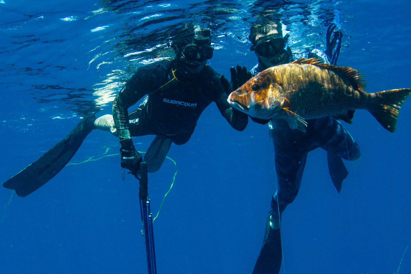 Two men wearing diving gear and holding a spear gun underwater with a Snapper in the foreground