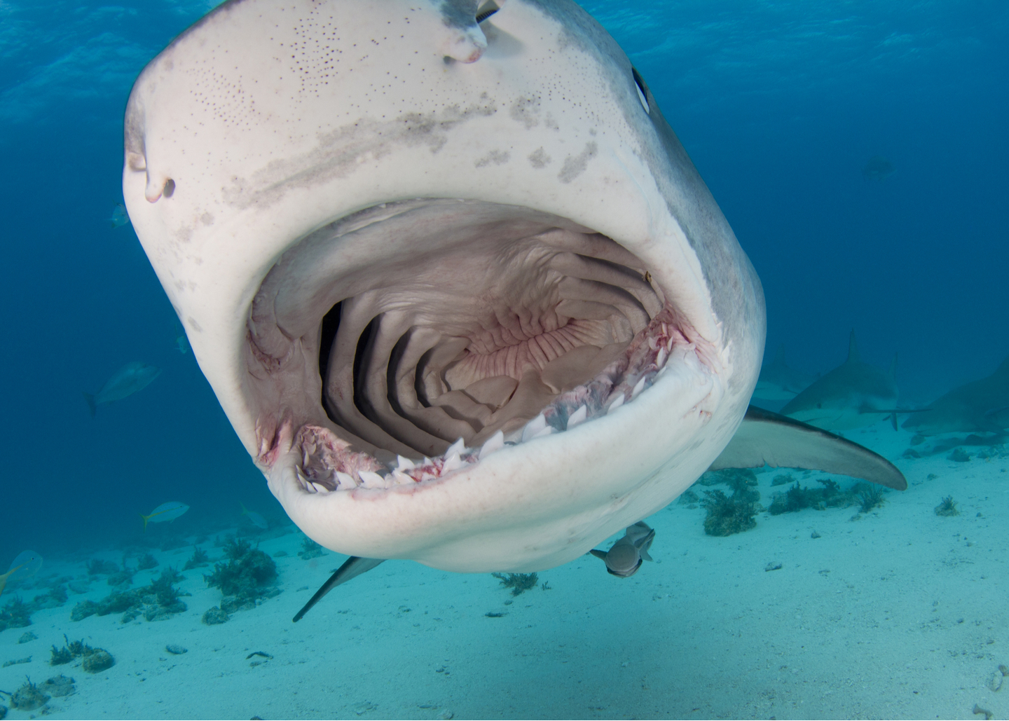IF AT FIRST YOU DON'T SUCCEED TRY DOING IT THE SHARK CATCHER TOLD YOU TO