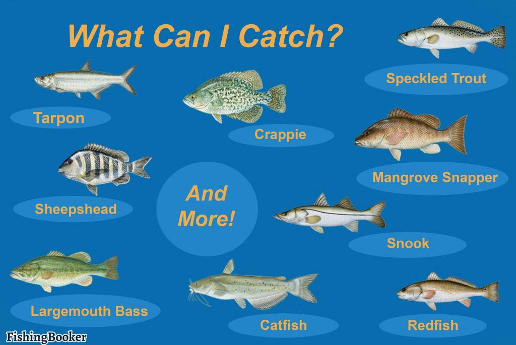 An infographic showing the top fish species to target in Cape Coral, Florida