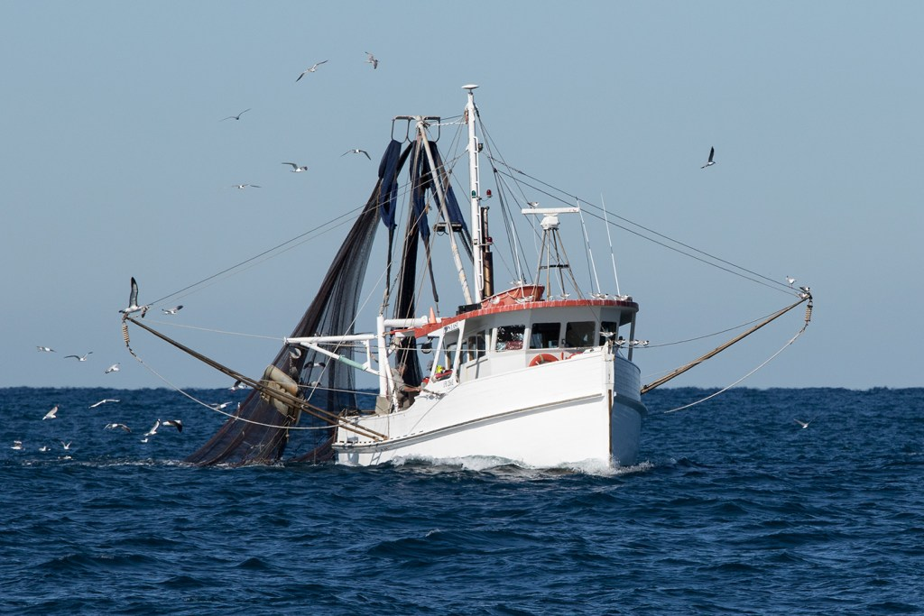 A white commercial Shrimp trawler boat pulling in its nets, with seagulls flying around behind it.