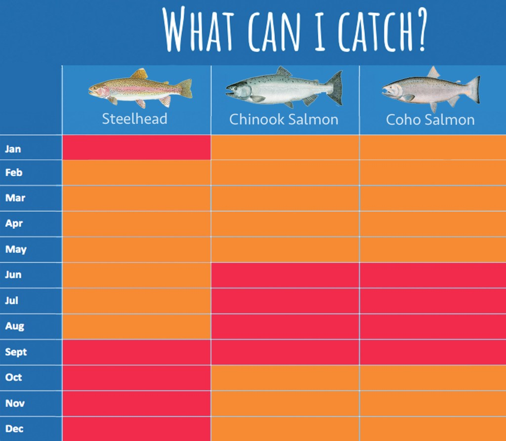 An infographic showing top catches in the Trinity River, and the best seasons for hooking them.