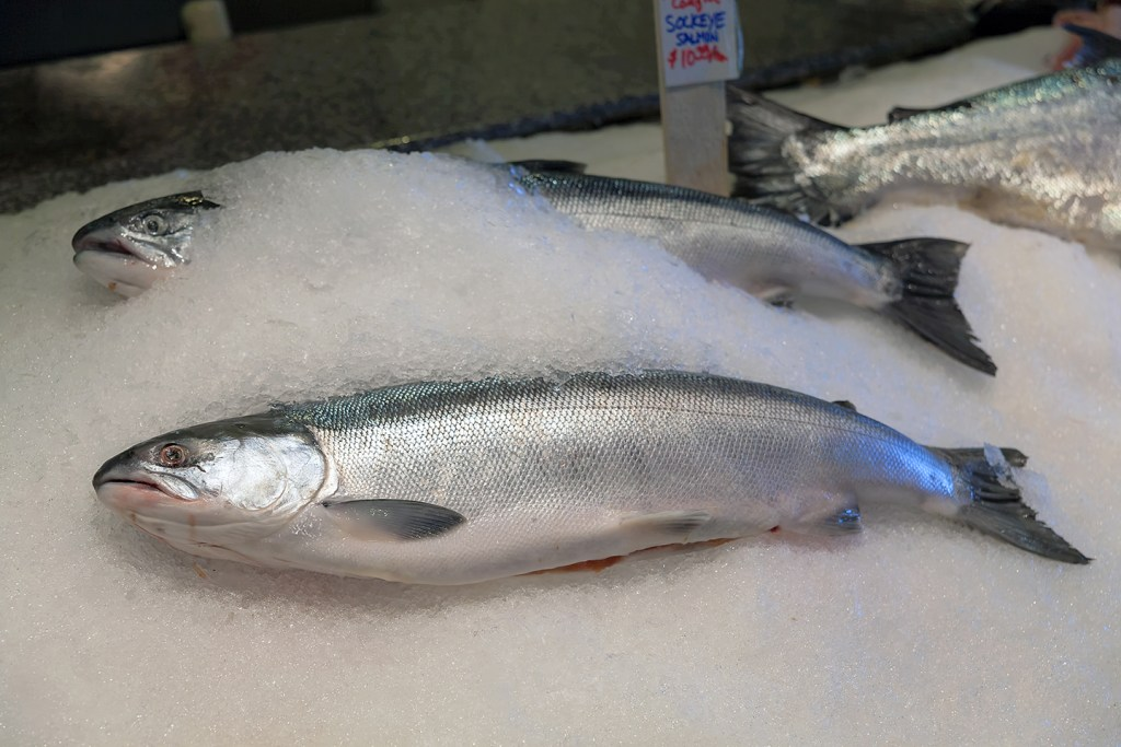 "A Sockeye Salmon laid on ice at a fish market. There is another Salmon half-submerged in ice behind it, and the tail of a different fish in the top right corner. A sign at the top of the image reads ""Sockeye Salmon $10,35/lb"""