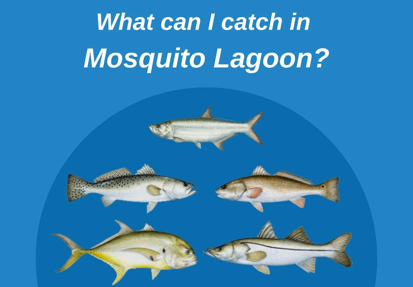 Infographic showing possible catches in Mosquito Lagoon, such as Tarpon, Redfish, Spotted Seatrout, Jack Crevalle, and Snook