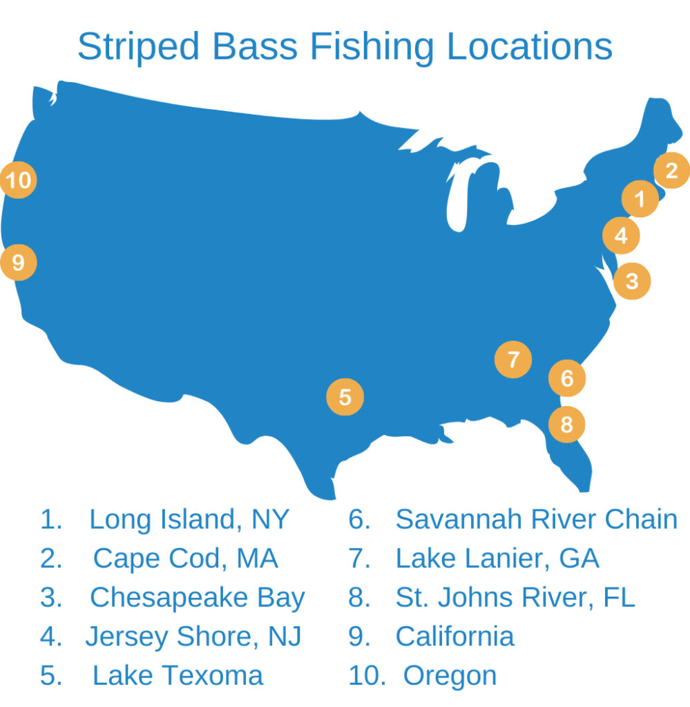 An infographic showing the top locations for Striped Bass fishing in the USA: Long Island, Cape Cod, Chesapeake Bay, Jersey Shore, Lake Texoma, Lake Lanier, St. Johns River, Savannah River chain, California, and Oregon