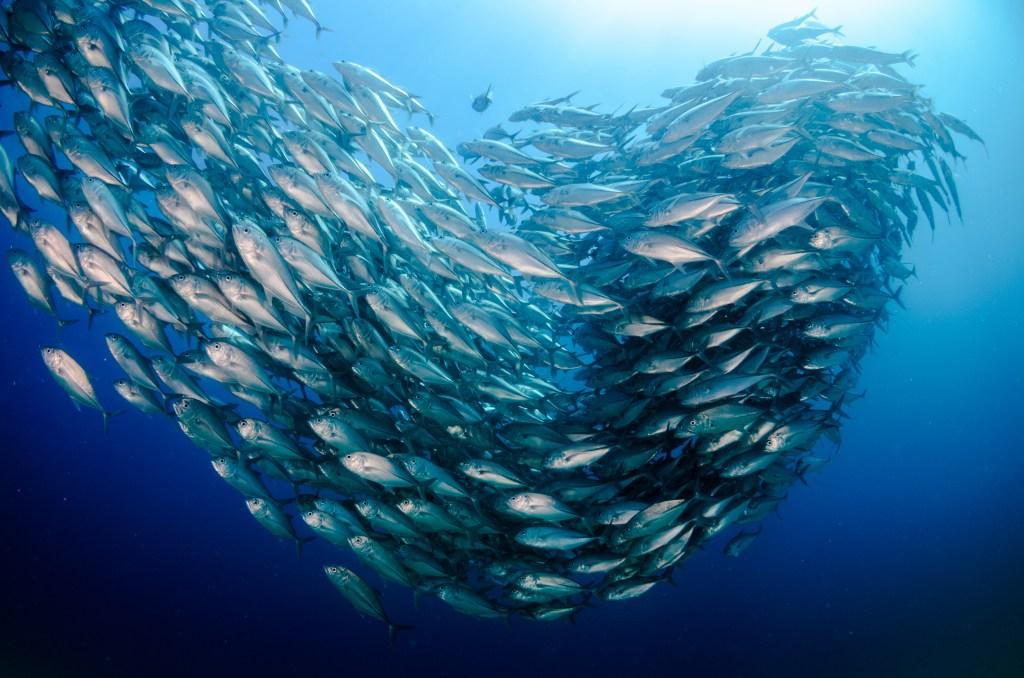 a school of fish in Cabo Pulmo, Sea of Cortez