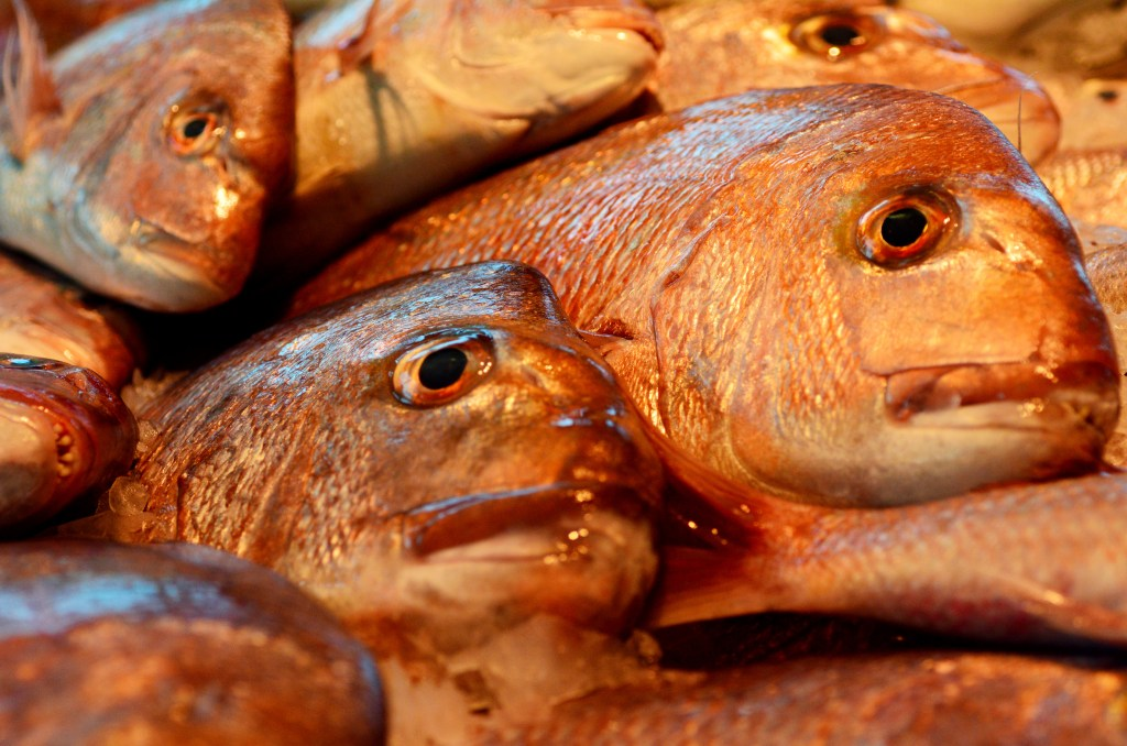 lots of australian snapper stacked next to each other