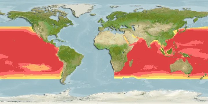 Black Marlin habitat heatmap