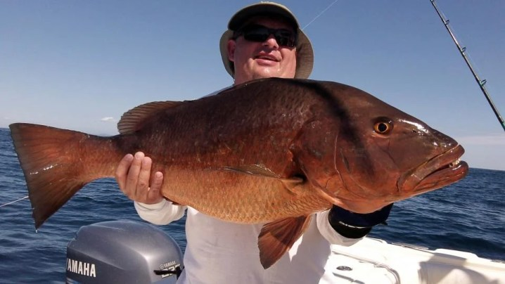 Cubera Snapper (source: http://cubera-snapper.blogspot.com/)