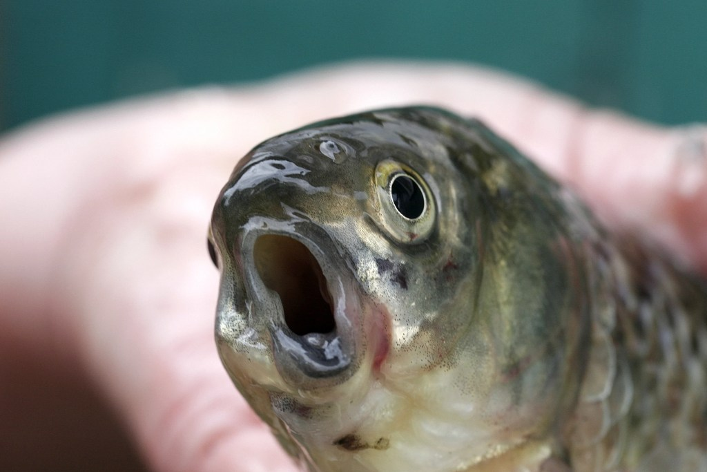 fish with its mouth open