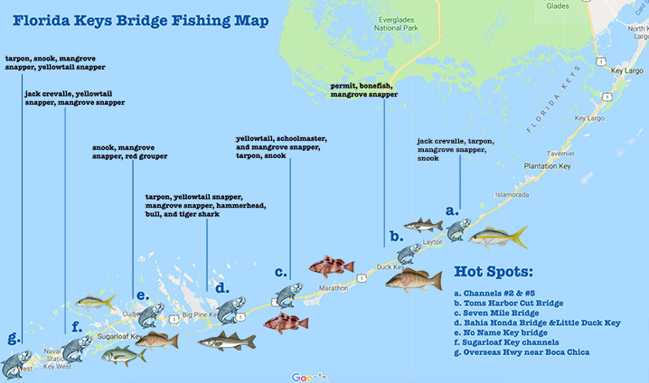 Best Florida Keys Bridge Fishing Spots: All You Need to Know