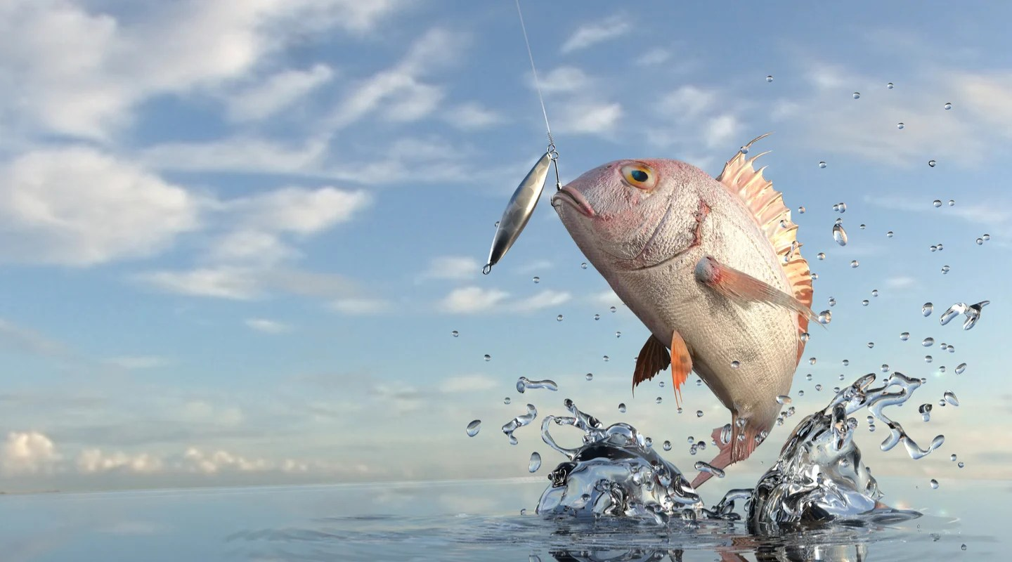 leaping snapper caught with a fishing lure